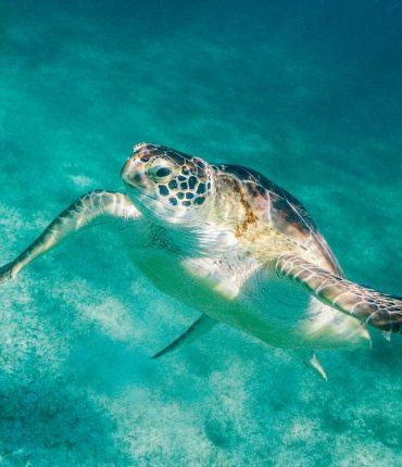 Deleitate en las cristalinas playas de Cancún por 7 noches