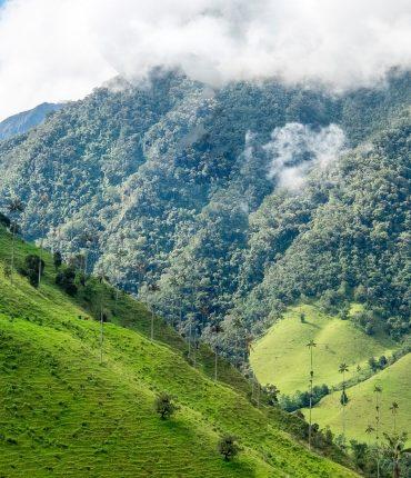 Recorré la Ruta del Café de Colombia: Bogotá, Armenia y Medellín